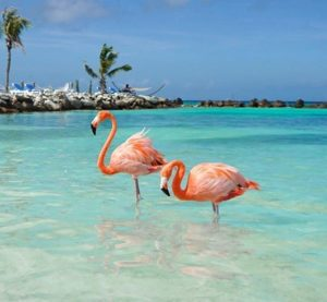 Aruba – TouristCoup